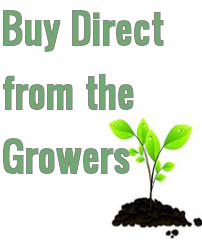 Buy Direct from the Growers